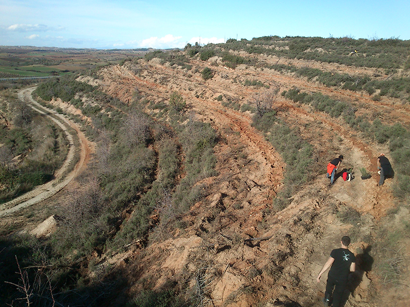 Reforestration